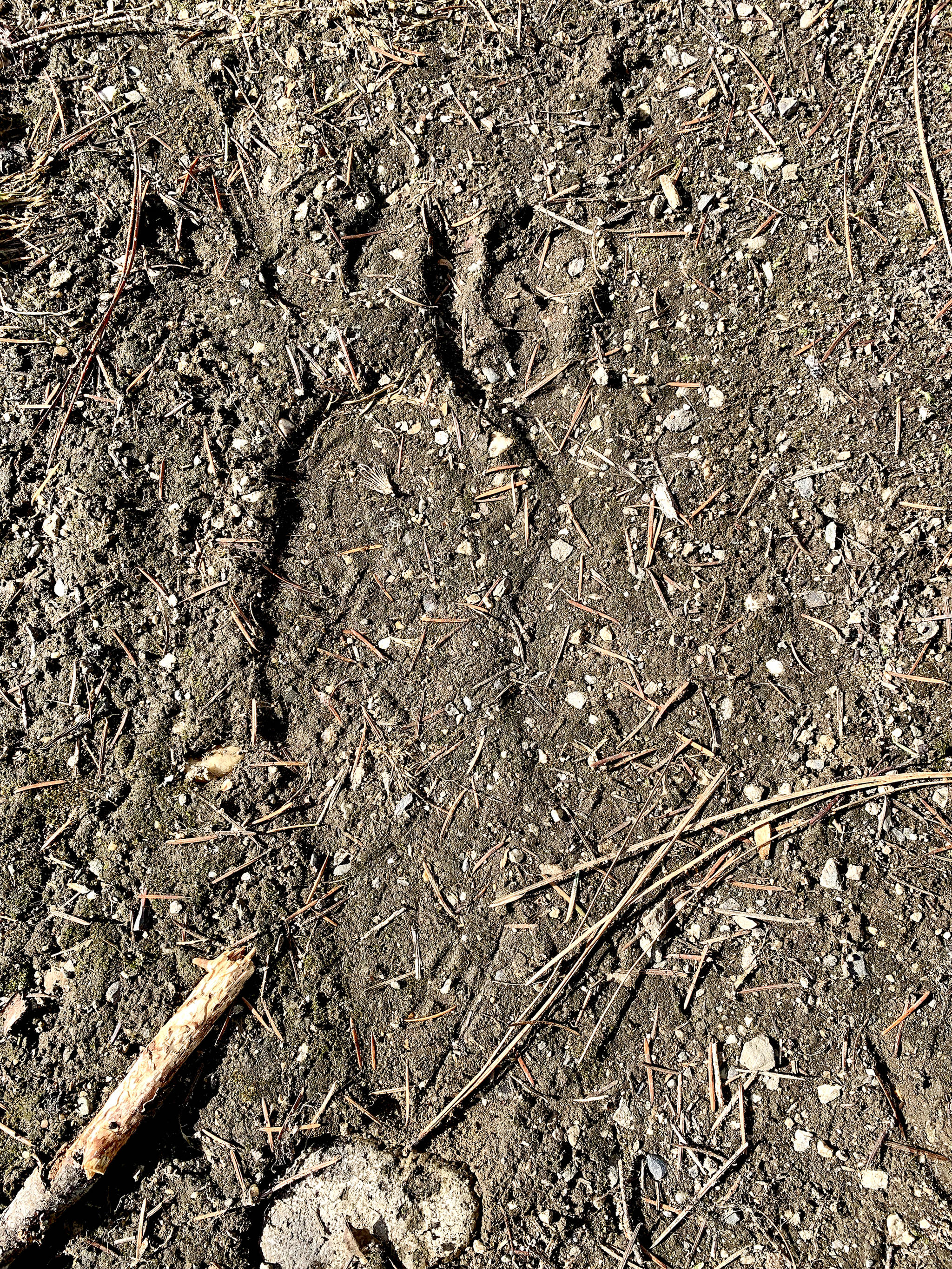 A large footprint spotted near Shuswap Falls over the Easter weekend is being examined by wildlife experts. (Sarah McRann photo)